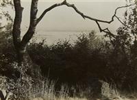 birkenast und elbinseln [birch branch and elb islands] by albert renger-patzsch